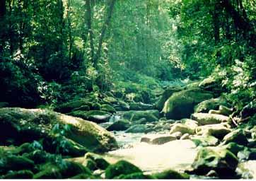 Floresta Obscura Mataatlantica1